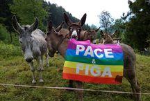 Bandiera Pace & Figa / Bandiera Pace e Figa