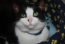 Staff  GATOSPHERA / El personal de GATOSPHERA también es felino