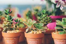 Plants - green inspiration