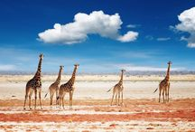 Etosha / Namibia's top safari destination, and one of the finest game reserves in Africa. http://www.secretearth.com/destinations/528-etosha-national-park