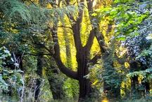 Trees/Woods