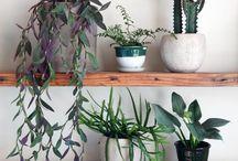 Indoor/outdoor easy gardening