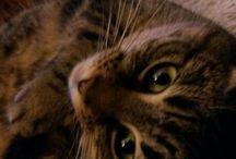 Gaïa the cat
