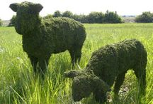 Topiaries / by Peggy Watson