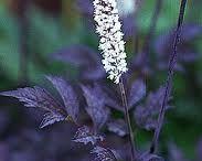 пурпурные растения