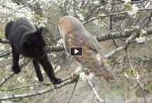 Unlikely Animal Friendships / Amazing connections between unlike species