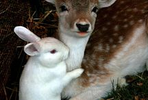 Animals / by Barbara Bean