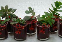 Succulent Bonbonniere