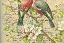 Vintage birds and flowers