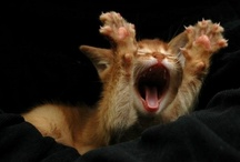 Kitty cat's :3