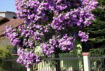 fiori da serra.