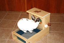 bunny stuff