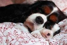 Sleep tight / Sleepy dreams