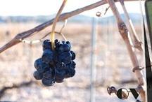 Vines and Varieties / by Onirovins