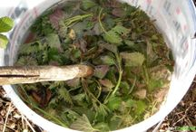 Pflanzen und Pflanzenschutzmittel