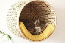 Animal storage :) / Places for the cats and dog to hang out