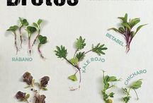 Hierbas y Especias Gourmet