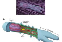 Cell Movement / Cell Movement, cancer, motility, immune system, immunology