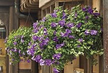 hanging baskets / by Angie Orlebar Baynes