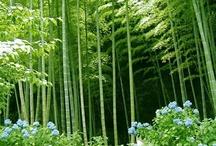 Bosques Bambú