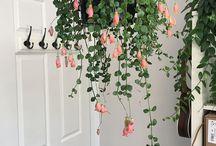 House plants / Plantas para el hogar