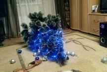 Katzen und Weihnachtsbäume!!