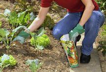 Düngen / Düngen ist ein wichtiger Bestandteil der Pflege von Pflanzen. Rosen, Hortensien, Stauden und Obstbäume - alle sollten mit Dünger versorgt werden. Die frage ist nur wie oft und in welchen Mengen? Das erfahren Sie auf dieser Pinnwand. Selbstgemachte Dünger und die Behandlung mit natürlichen Stoffen finden Sie natürlich auch bei uns. Viel Spaß beim durchstöbern.