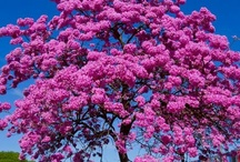 Árvores / Para se encantar