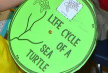 ocean life lesson