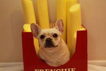 Frenchie bulldog