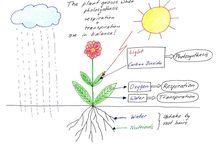 School Garden - Plant Parts