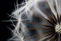 Makrofotokrafie / Blumen,Tiere....Gräser.