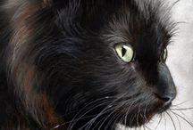 Favoritbild svart katt