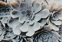 Garlic and Grenadine | Flower Power
