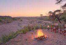 SAFARI EMBASSY: BOOK AFRICAN SAFARI TOURS TO ENJOY THE WILDLIFE ADNVENTURES