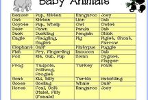 Baby Animal Game Baby Shower