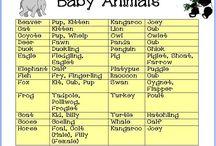 Baby Animal Game Baby Shower