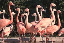Állatkertek világnapja
