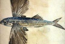 Fish and Shell art