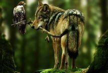 wilki i ptaki