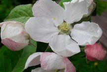 Flowers Helena