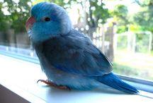 parrotlet love!