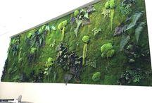 MUR VEGETAL STABILISÉ / Végétal Indoor vous propose d'habiller tout ou partie de vos murs en végétaux stabilisés. Devenu un outil de décoration par excellence, le mur végétal stabilisé est utilisé par de nombreux architectes et designers. Dotés de nombreux atouts, le mur végétal stabilisé est devenu un incontournable de la décoration d'intérieur d'aujourd'hui.