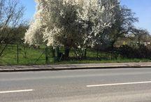 Frühling #spring #sunny #sunday