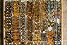 Schmetterlinge - butterflies