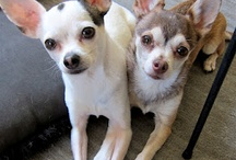 Pet ideas & Chihuahuas / by Olivia Kakande-Chase