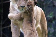 Kerajaan Hewan / animals