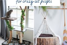 For Crazy Cat People