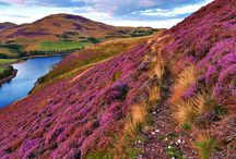 Land of the hill and heather, land of the awful weather / Scotland, Iceland, Norway, Faroe islands.. etc. Rocky coast lines, windy moors, sheeps, sweaters, rubber boots... ♥