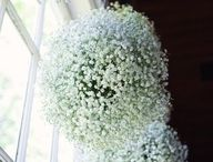 White Gyp for Weddings